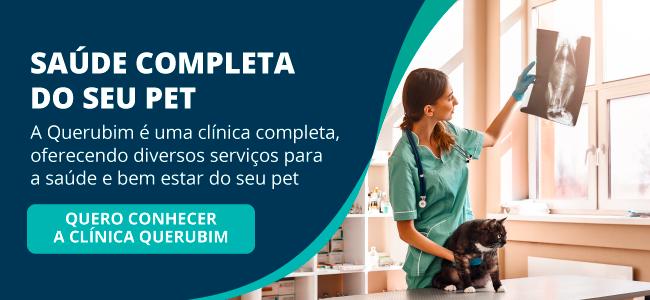 veterinário emergência