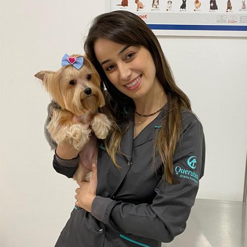 Clínica veterinária 24 horas Moema