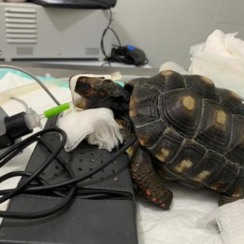 Endoscopia veterinária