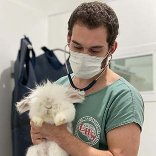 Hospital veterinario 24h